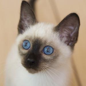 Что это значит и какой котенок нужен